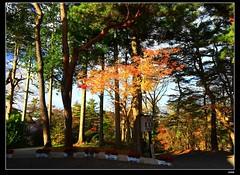 nEO_IMG__MG_7176 (c0466art) Tags: trip travel blue autumn trees light reflection water beautiful japan creek season landscape photo maple scenery rocks colorful tour place popular 2014  c0466art canon1dx