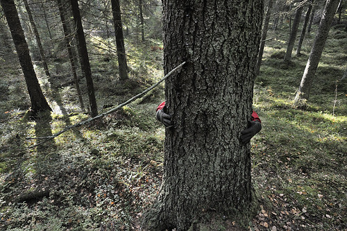 Punkaniemi, high conservation value forest planned to be clearcut by Finnish forest industry