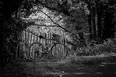 The canal bike (Daz Smith) Tags: city uk trees portrait people urban bw streets bike canon fence blackwhite wooden bath candid citylife thecity streetphotography vegetation bushes biccle canon6d dazsmith bathstreetphotography