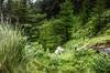 Rhondda Valley (1)