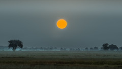 The bird of wilderness (piotrekfil) Tags: autumn trees sunset sky sun mist nature field fog landscape pentax poland piotrfil