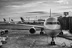 Week3-Land (lilianguerrero) Tags: dogwood52 dogwood2017 anddogwoodweek3 airport landed airplane avión aterrizaje bn bw newark