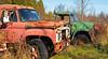 McLeans_2015 Nov 15_0018 (janetliz) Tags: mcleans junkyard autowreckers