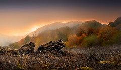 The other face of Sicily (Michele Naro) Tags: sicily sicilia sizilien sicile autumn autunno herbst etna wald fog nebbia bergen mountains montagne nikond610 samyang85mmf14 nikon