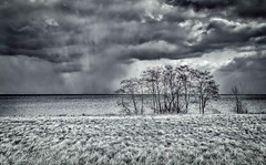 Storm Clouds Over the Lake (otterman51) Tags: grimsby lakeontario landscape ontario tree clouds cold escarpment lake nature sky winter stormy storm blackandwhite dark outdoors outdoor