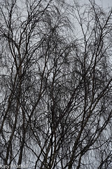 Fade to grey (Katy Wrathall) Tags: 2017 2017pad 21365 eastriding eastyorkshire england january colourless dreary dreich gray grey lacklustre winter