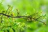 Rain in a day of spring (Sr.Go..) Tags: spring rain positivevibes energy refreshing calm green nature naturelover newleaves