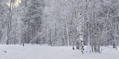 Winter (rubalanceman) Tags: moscow winter snow forest park
