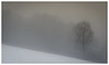 neblina (Mostly Tim) Tags: fog mist nebel neblina dunst baum bäume árbol árboles tree trees winter invierno