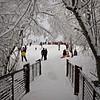 Bridge and sledding 1 11 2017 (rbdal (Rick Dalrymple)) Tags: sledding citypark francesstreetpark january winter snow snowstorm hillsboro washingtoncounty oregon d7000 nikon