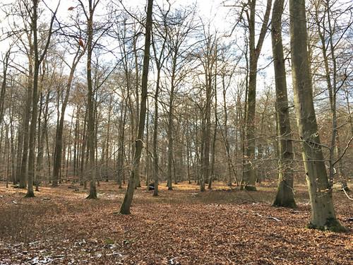 Der angebliche Eichenwald im Reliktwald Ost Abt.121 , NGIDn449776520