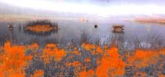 impressionism and the foggy fen (HansHolt) Tags: impressionism impresionismo impressionisme impressionismus mist fog autumn fall herfst ven fen lake meer water moliniacaerulea moorgrass pijpenstrootje landscape waterscape bovenveen echten drenthe netherlands island eiland reflection reflectie weerspiegeling orange oranje trees bomen canon 6d canoneos6d canonef24105mmf4lisusm