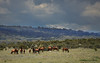 A lovely mob (iSPY Photography) Tags: brumbies wildhorses highcountry alpine australia slaughter in danger nationalpark nsw national parks environment