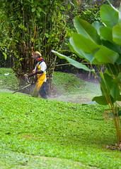 Cutting the back 40 (stevenbulman44) Tags: costarica 70200f28l green landscape lush lseries polarizer filter canon