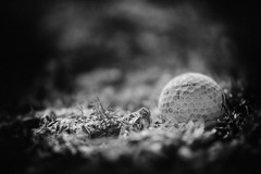 Snow is gone II (Saul G.) Tags: bw blackwhite black white monochrome pinhole nikon d7200 sigma 50100mm golf ball spring outdoors