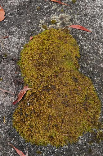 Furry moss