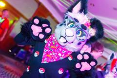 _MG_0728 (Tiger_Icecold) Tags: confuzzled cfz2016 cf2016 furcon furry convention fursuit birmingham party deaddog ddp deaddogparty