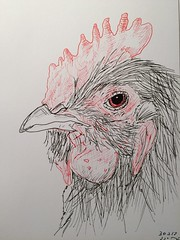 A rooster a day, day 30 (anviss) Tags: sketch drawing illustration tekening schets illustratie rooster haan black red stabilo uniball ink