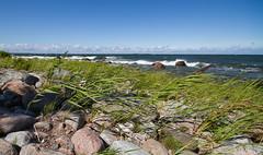 Seaweeds (Universal Stopping Point) Tags: coast nationalpark weeds estonia rocky baltic lahemaa