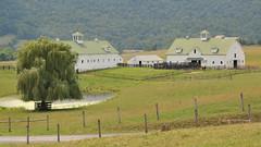 Horse Farm in Lewisburg, W VA (Andrea Mazzotta) Tags: trees countryside pond nikon farm barns westvirginia lewisburg horsefarm d3x