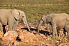 elephants_1 (Dime Pashoski) Tags: africa nature desert south safari rhino elephants aquila bufallo
