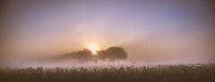 The twilight zone (Ingeborg Ruyken) Tags: morning autumn trees sun mist fall fog sunrise dawn nationalpark twilight bomen flickr september spooky naturereserve zon dropbox ochtend facebook 2015 empel zonsopkomst natuurfotografie spookachtig hersft kanaalpark 500pxs hustenweg
