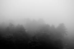 (ioannabo) Tags: trees blackandwhite bw nature monochrome fog forest photography photo nikon photoshoot earth creepy greece lovely sanatorium parnitha d3200