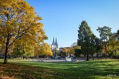 DSC_0227.jpg (Q-BEE) Tags: park autumn trees colours laub herbst cologne köln leafs spaziergang