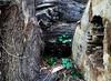 A walk in the woods (Leica SL + 50mm APO ASPH Summicron) (adamnsinger) Tags: leica trees 50mm woods logs apo sl summicron f2 asph