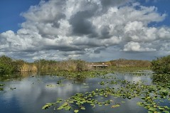 fall in the glades (rovingmagpie) Tags: clouds dock florida everglades boardwalk evergladesnationalpark spatterdock anhingatrail sfi2015
