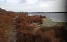 En longeant l'étang du Ponant - IMG_4782 (6franc6) Tags: 30 plante rando languedoc petite vélo gard décembre camargue etang 2015 ponant 6franc6 kalkoff haplophile