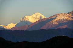 Dhaulagiri I 8167m (Poxxel) Tags: nepal sunrise sonnenaufgang sarangkot dhaulagirii