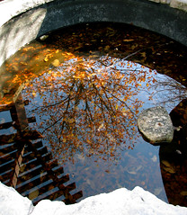 IMG_9447 (Mat_B) Tags: forest nature independence grove libertyville illinois reflection pond pool detail tree sky trellis