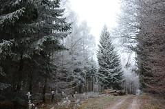 DSC_5739 Ein frostiger Morgen im Wald... - A frosty morning in the forest ... (baerli08ww) Tags: deutschland germany rheinlandpfalz rhinelandpalatinate westerwald westerforest wald forest winter frost frozen raureif hoarfrost