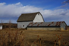 The Old Barn (Let Ideas Compete) Tags: barn gambrel roof tin tinroof rusty teasel boulder co colorado