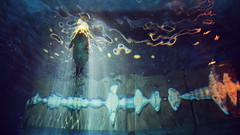 Mermaid (Jukai Fujiki) Tags: sony a6000 ilce6000 selp18105g wildlife mermaid winter white water waterscapre reservoir outside hongkong colors peaceful animals nature dark harmony landscape light leisure licht life lake lonesome naturaleza cinematic blue black national
