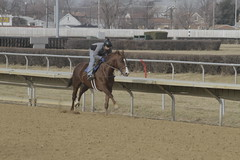 _MG_5677 (thinktank8326) Tags: thoroughbred racehorse racetrack equine horse hawthorne illinois canon eos 7d