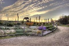 sunset in the paddock (Jules Marco) Tags: paddock kuppel pferde horses tiere animal garten garden sunset sonnenuntergang wolken clouds sky himmel outdoor hdr highdynamicrange abend evening canon eos600d sigma1020mmf35exdchsm weitwinkel wideanglelens