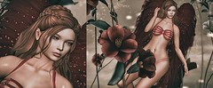 ♚ 200 ♚ (Luxury Dolls) Tags: eleganceboutique truth blueberry azdesign angel red theoutergarden magical forest roses blog blogger eyes catwa maitreya