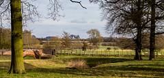 Wistow (Peter Leigh50) Tags: wistow bridge river sence oak trees field sheep lambs farmland meridian east midland trains leicestershire