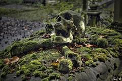 Cimetière de Bruges_2503 (Sleeping Spirit) Tags: cimetière bruges cemetary cemetaries