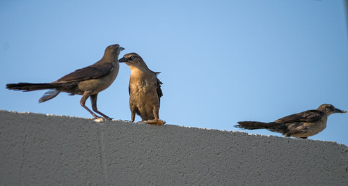 Family of Birds