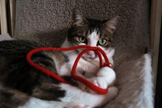 Ellen and the red string