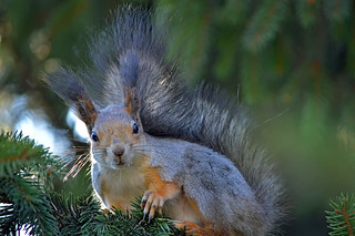 - Halloooo...!!! Do you have some nuts?