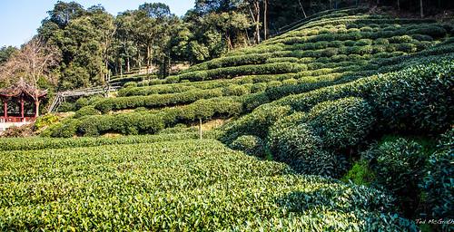 2016 - China - Hangzhou - Meijiawu Tea Culture Village - 3 of 5