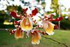 #orchids #flower #chicanna #ecovillage #messico #2017 #diQ1 #κνίδωση (solaika) Tags: orchidea chicanna ecovillage messico 2017 diq1 κνίδωση