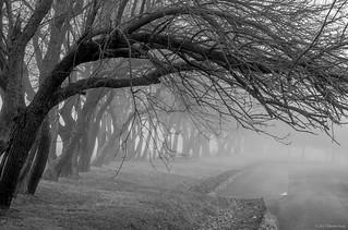 Fog on the Trees [Explored] ©2017 Steven Karp.
