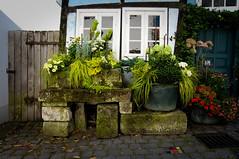 Street garden (Jos Mecklenfeld) Tags: street flowers germany garden blumen garten nordrheinwestfalen bloemen tecklenburg duitsland sonynex3n