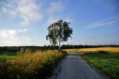 Morning walk (osto) Tags: denmark europa europe sony zealand scandinavia danmark slt a77 sjlland osto alpha77 osto august2015