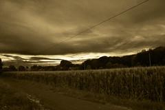 Landscape in SEPIA (betadecay2000) Tags: sepia clouds landscape corn dorf alt country wolken mais land nrw monochrom landschaft idylle rosendahl lndlich darfeld bauerschaft kreiscoesfld